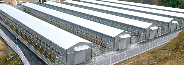 ぐんけい農園:養鶏場